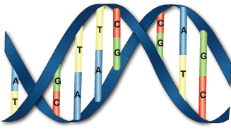 DNA Sequence (data encoding within Molecular Computing)