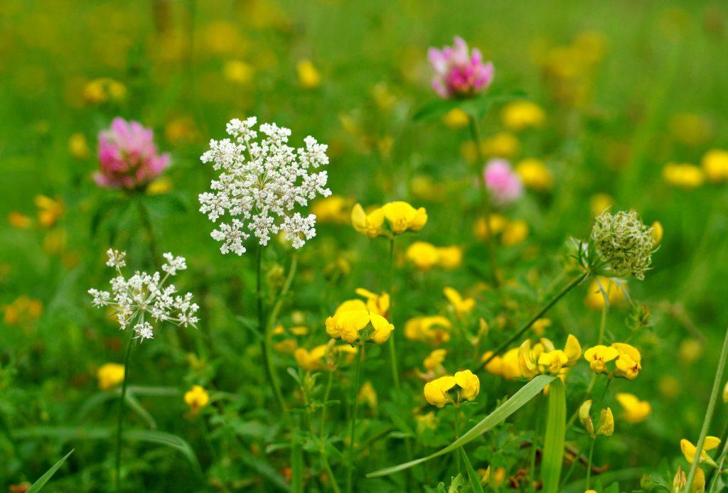 Flower photo by Andrea Stöckel